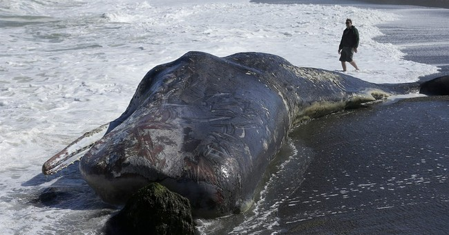 Experts remove whale carcass near San Francisco